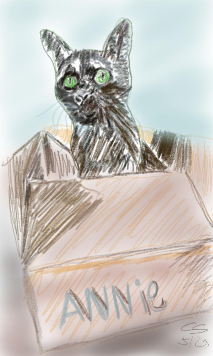 Katze  Bleistiftzeichnung